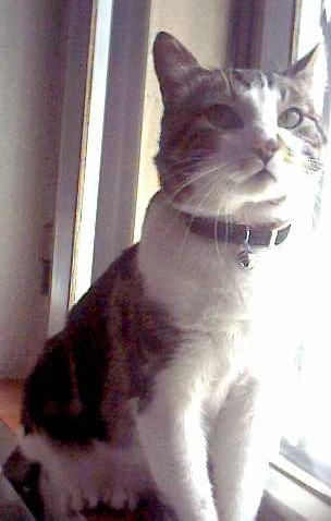 Carta a mi viejo gato viejo.